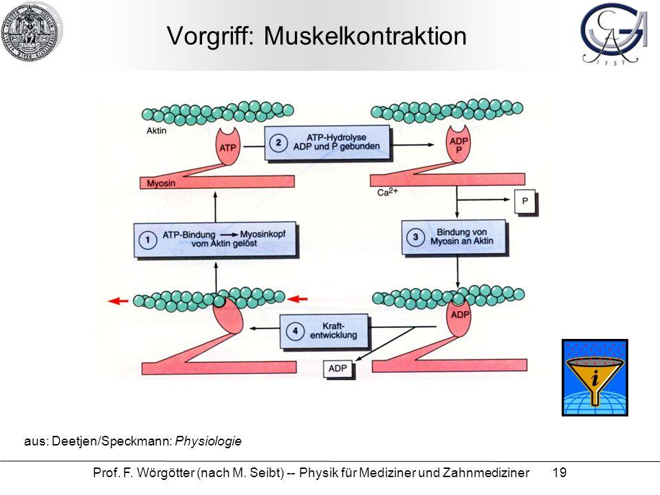 Prof. F. Wörgötter (nach M. Seibt) -- Physik für Mediziner und Zahnmediziner 19 Vorgriff: Muskelkontraktion aus: Deetjen/Speckmann: Physiologie