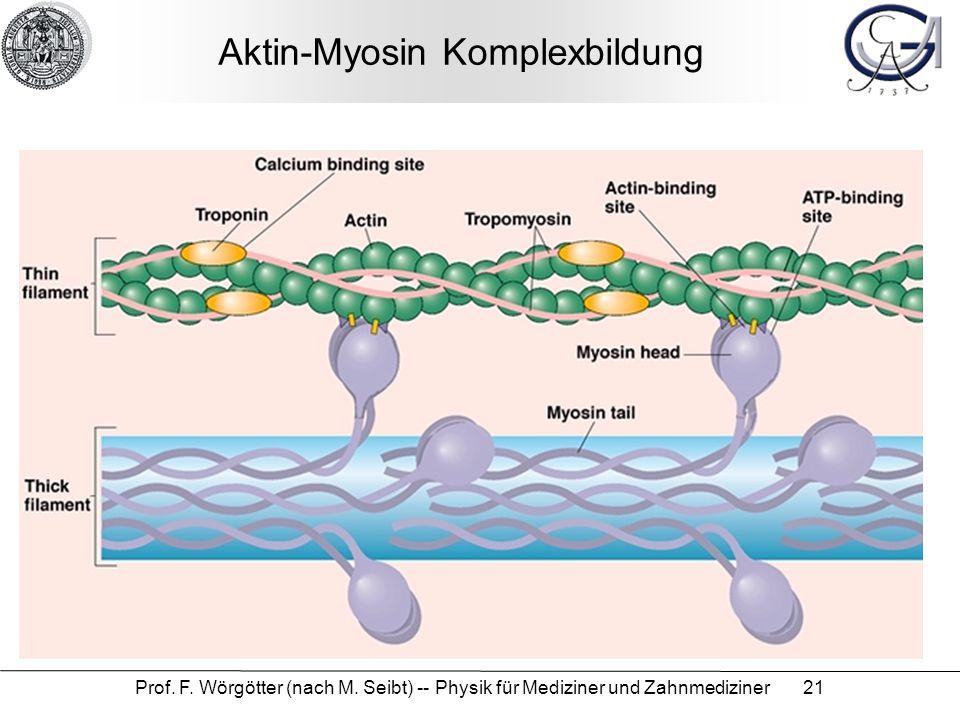 Prof. F. Wörgötter (nach M. Seibt) -- Physik für Mediziner und Zahnmediziner 21 Aktin-Myosin Komplexbildung
