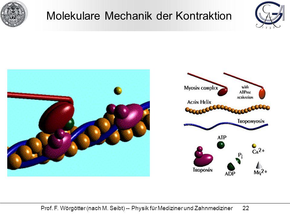 Prof. F. Wörgötter (nach M. Seibt) -- Physik für Mediziner und Zahnmediziner 22 Molekulare Mechanik der Kontraktion