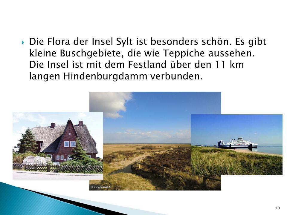  Die Flora der Insel Sylt ist besonders schön. Es gibt kleine Buschgebiete, die wie Teppiche aussehen. Die Insel ist mit dem Festland über den 11 km