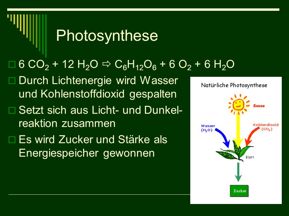 Photosynthese  6 CO 2 + 12 H 2 O  C 6 H 12 O 6 + 6 O 2 + 6 H 2 O  Durch Lichtenergie wird Wasser und Kohlenstoffdioxid gespalten  Setzt sich aus L