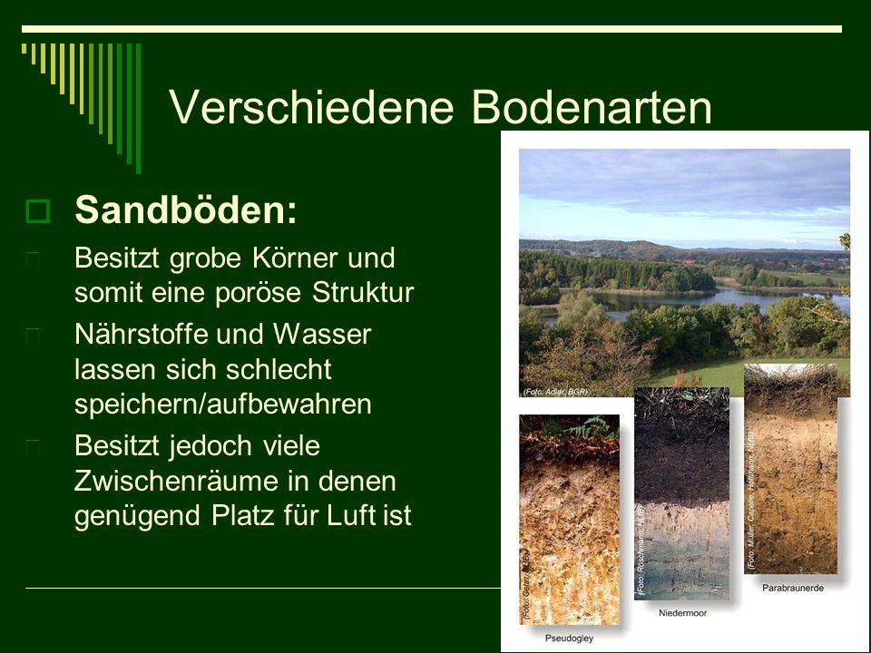 Verschiedene Bodenarten  Sandböden:  Besitzt grobe Körner und somit eine poröse Struktur  Nährstoffe und Wasser lassen sich schlecht speichern/aufb