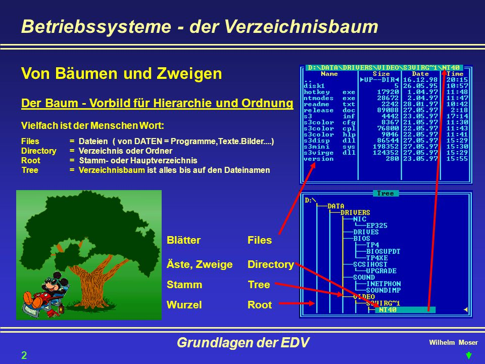 Wilhelm Moser Grundlagen der EDV Betriebssysteme - der Verzeichnisbaum Der Baum - Vorbild für Hierarchie und Ordnung Wurzel Stamm Äste, Zweige Blätter