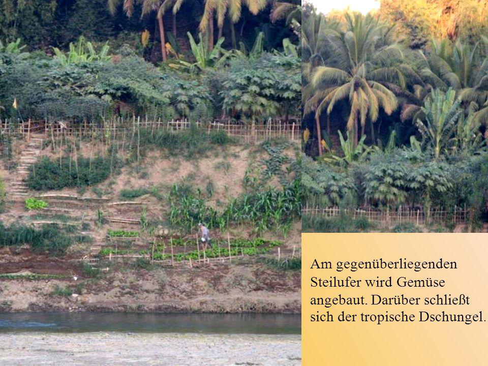 Am gegenüberliegenden Steilufer wird Gemüse angebaut. Darüber schließt sich der tropische Dschungel.