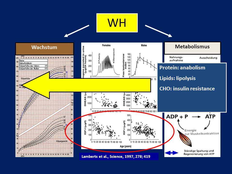 Lamberts et al., Science, 1997, 278; 419 WH WachstumMetabolismusProtein: anabolism Lipids: lipolysis CHO: insulin resistance