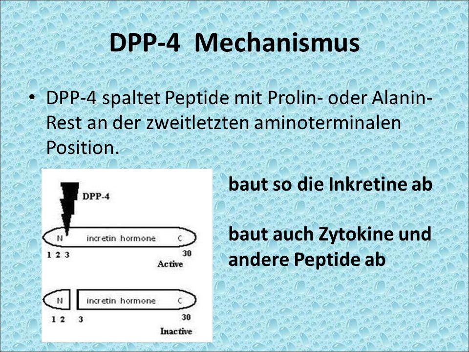 DPP-4 Mechanismus DPP-4 spaltet Peptide mit Prolin- oder Alanin- Rest an der zweitletzten aminoterminalen Position. baut so die Inkretine ab baut auch