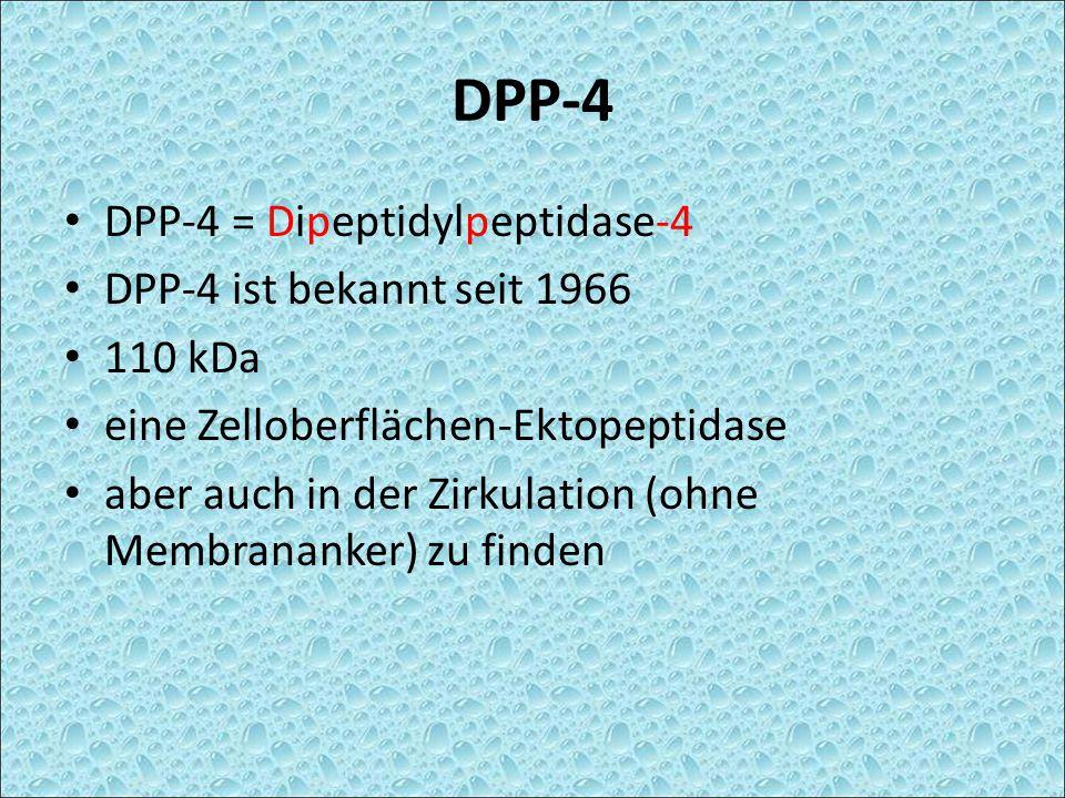 DPP-4 DPP-4 = Dipeptidylpeptidase-4 DPP-4 ist bekannt seit 1966 110 kDa eine Zelloberflächen-Ektopeptidase aber auch in der Zirkulation (ohne Membrana