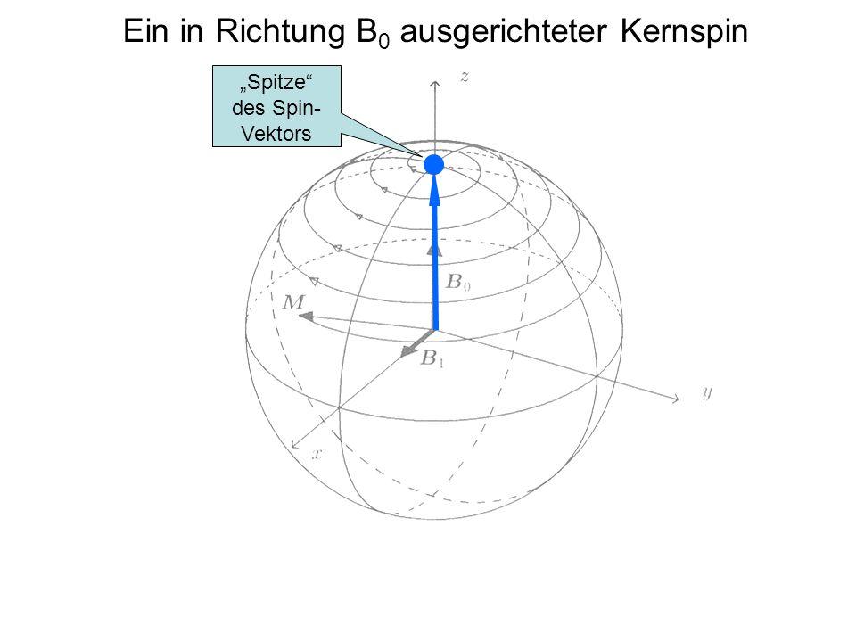 """Ein in Richtung B 0 ausgerichteter Kernspin """"Spitze"""" des Spin- Vektors"""
