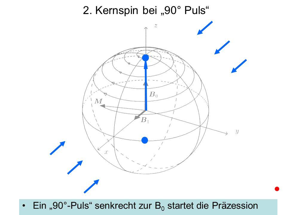 """2. Kernspin bei """"90° Puls"""" Ein """"90°-Puls"""" senkrecht zur B 0 startet die Präzession"""