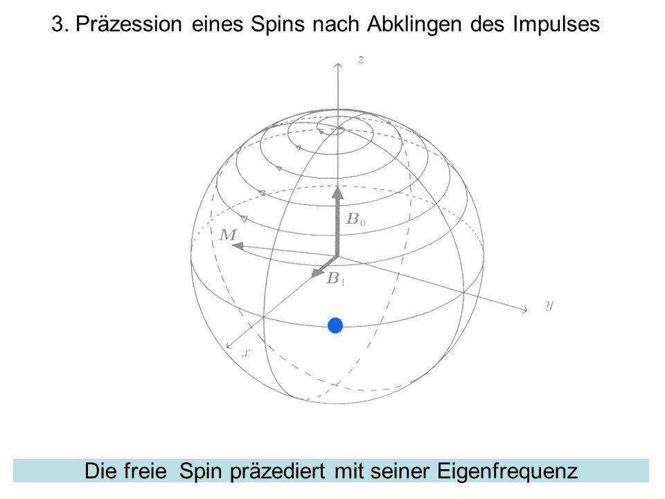 Die freie Spin präzediert mit seiner Eigenfrequenz 3. Präzession eines Spins nach Abklingen des Impulses