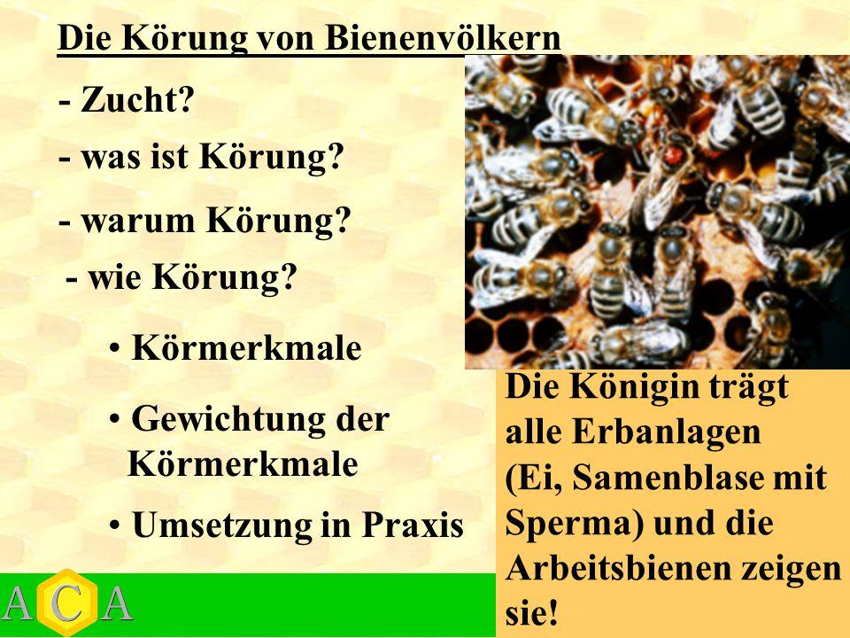 Die Körung von Bienenvölkern - was ist Körung? - warum Körung? - wie Körung? Körmerkmale Gewichtung der Körmerkmale Umsetzung in Praxis Die Königin tr
