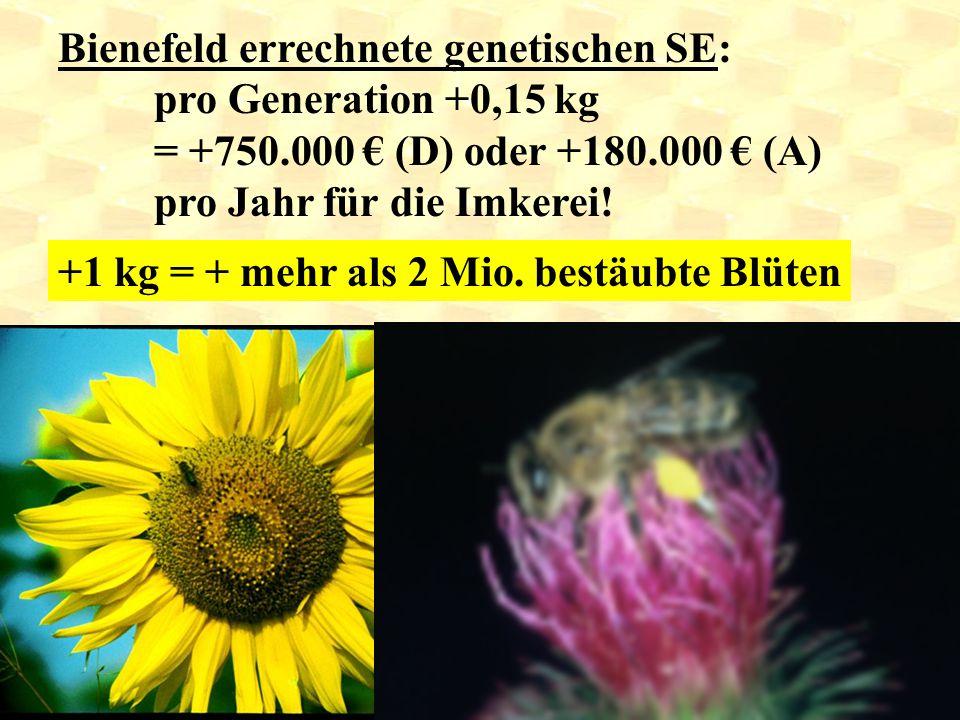 Bienefeld errechnete genetischen SE: pro Generation +0,15 kg = +750.000 € (D) oder +180.000 € (A) pro Jahr für die Imkerei! +1 kg = + mehr als 2 Mio.