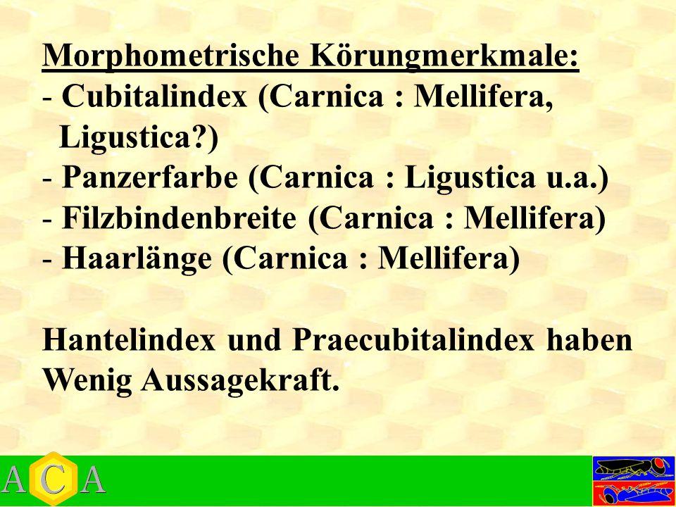 Morphometrische Körungmerkmale: - Cubitalindex (Carnica : Mellifera, Ligustica?) - Panzerfarbe (Carnica : Ligustica u.a.) - Filzbindenbreite (Carnica