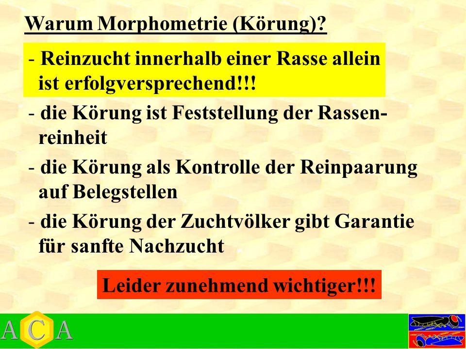 Warum Morphometrie (Körung)? - die Körung als Kontrolle der Reinpaarung auf Belegstellen - Reinzucht innerhalb einer Rasse allein ist erfolgverspreche