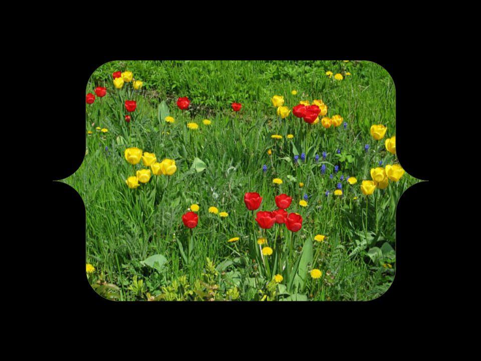 Schneeglöckchen sind längst erwacht und warten nur auf den richtigen Moment, um mit Blättern und Blüten über dem Boden zu erscheinen.
