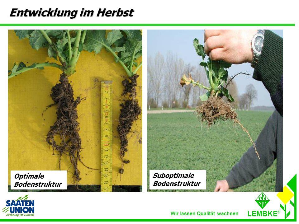 Wir lassen Qualität wachsen LEMBKE ® Entwicklung im Herbst Suboptimale Bodenstruktur Optimale Bodenstruktur