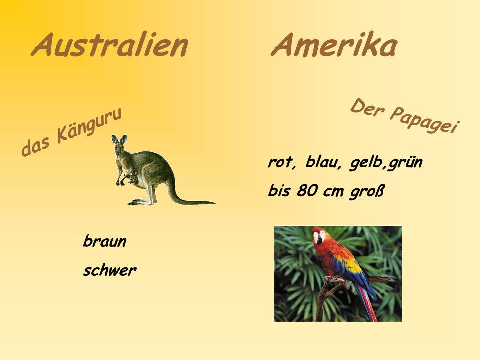 Australien Amerika d a s K ä n g u r u braun schwer D e r P a p a g e i rot, blau, gelb,grün bis 80 cm groß