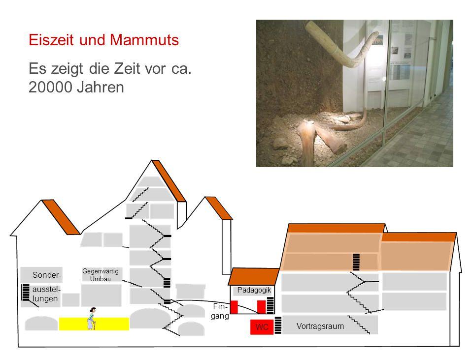 Vortragsraum WC Ein- gang Pädagogik Sonder- ausstel- lungen Gegenwärtig Umbau Eiszeit und Mammuts Es zeigt die Zeit vor ca.