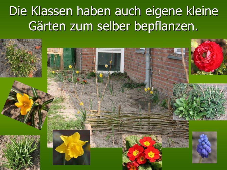 …hier bauen die Kinder der Garten - AG für den Sommer ganz viele leckere Gemüsesorten an. Von einigen bekommen wir sogar was ab, aber das meiste essen