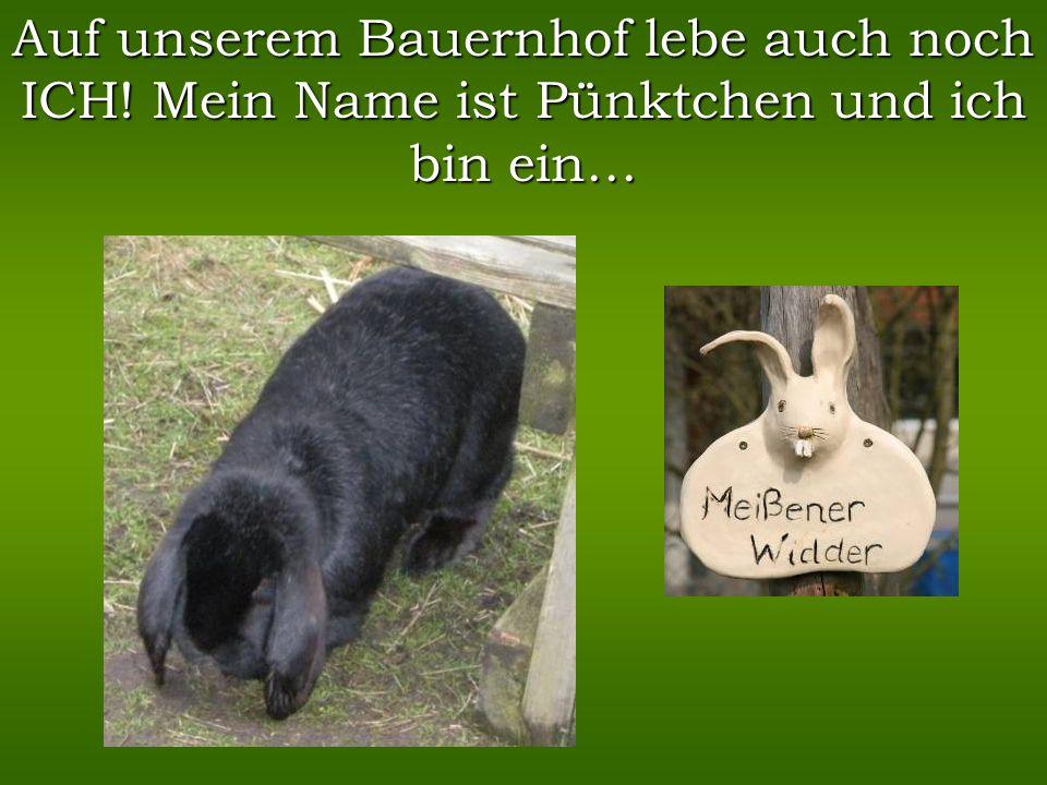 Ich bin eine sehr freche deutsche Edelziege. Meine Hobbys sind ausbüchsen, fressen und mit den Kindern spielen. Das ist mein Speiseplan: Ich wiege 35