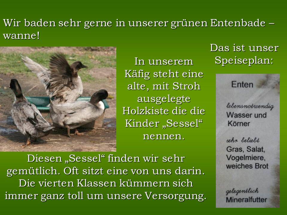Ich heiße Nag - Nag. Meine Artgenossen, die Pommern- Enten und ich sind vom Aussterben bedroht aber trotzdem sehr wild! Oft jagen wir uns gegenseitig.