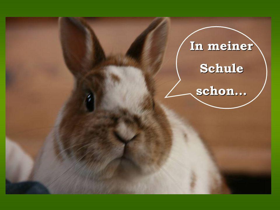 I c h b i n e i n e o s t f r i e s i s c h e M ö w e … Ich bin hier der Chef !… ich bin ein Lakenfelder… … ich bin ein Sundheimer-Huhn...