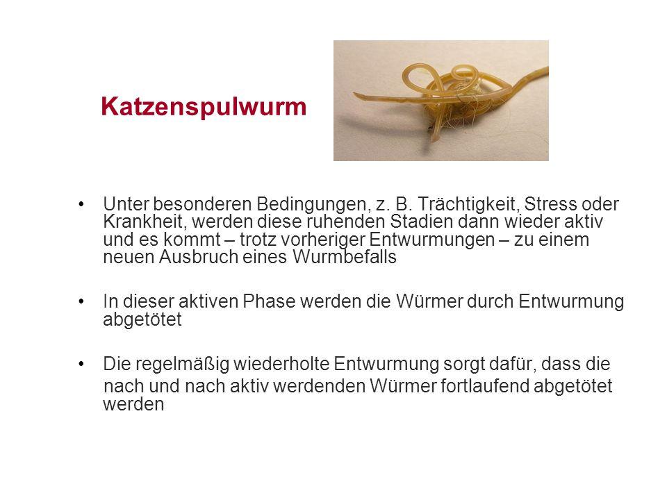 Katzenspulwurm Unter besonderen Bedingungen, z.B.