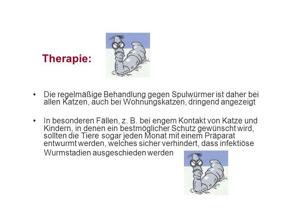 Therapie: Die regelmäßige Behandlung gegen Spulwürmer ist daher bei allen Katzen, auch bei Wohnungskatzen, dringend angezeigt In besonderen Fällen, z.