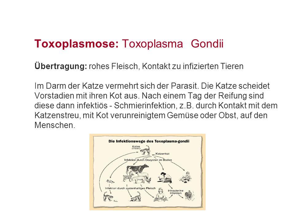 Toxoplasmose: Toxoplasma Gondii Ansteckung: > Monate Menschen Hunde oder Kaninchen Nachdem der Betroffene die Parasiten über den GI-Trakt aufgenommen hat, gelangen sie mit dem Blut in alle Körperteile!