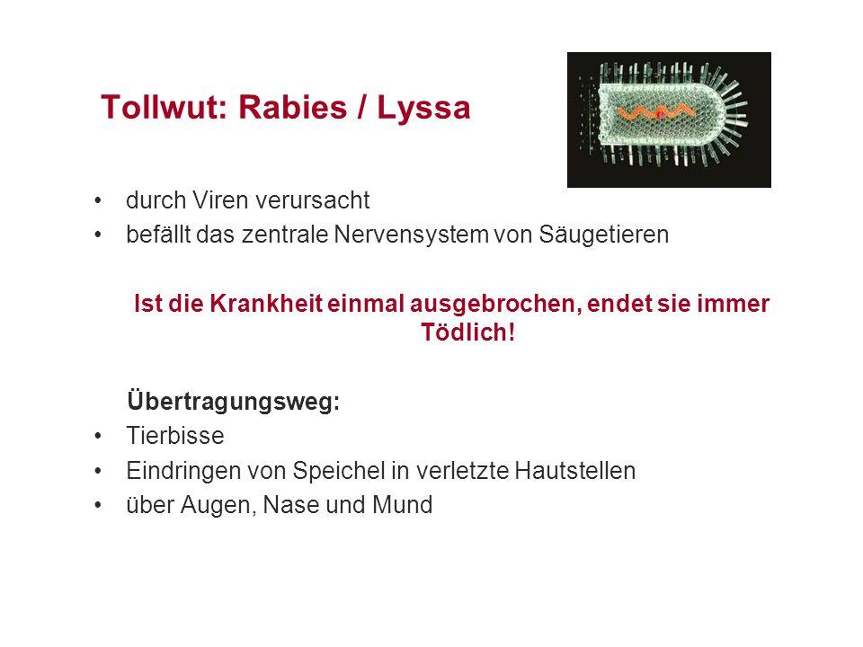 Tollwut: Rabies / Lyssa durch Viren verursacht befällt das zentrale Nervensystem von Säugetieren Ist die Krankheit einmal ausgebrochen, endet sie immer Tödlich.