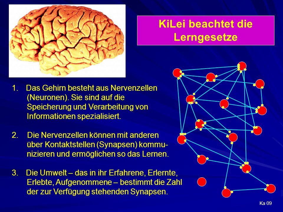 1.Das Gehirn besteht aus Nervenzellen (Neuronen). Sie sind auf die Speicherung und Verarbeitung von Informationen spezialisiert. 2. Die Nervenzellen k