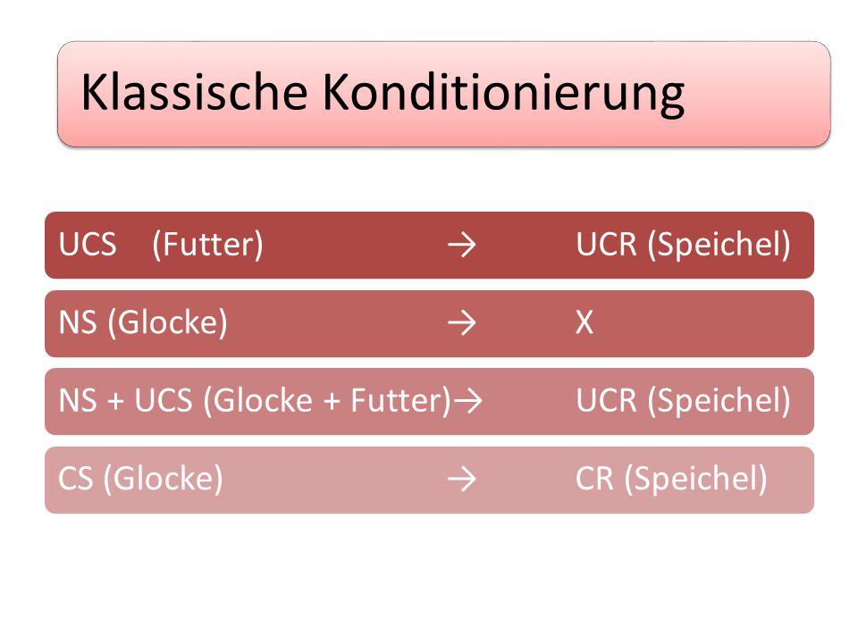 UCS (Futter)→UCR (Speichel)NS (Glocke)→XNS + UCS (Glocke + Futter)→UCR (Speichel)CS (Glocke)→CR (Speichel)