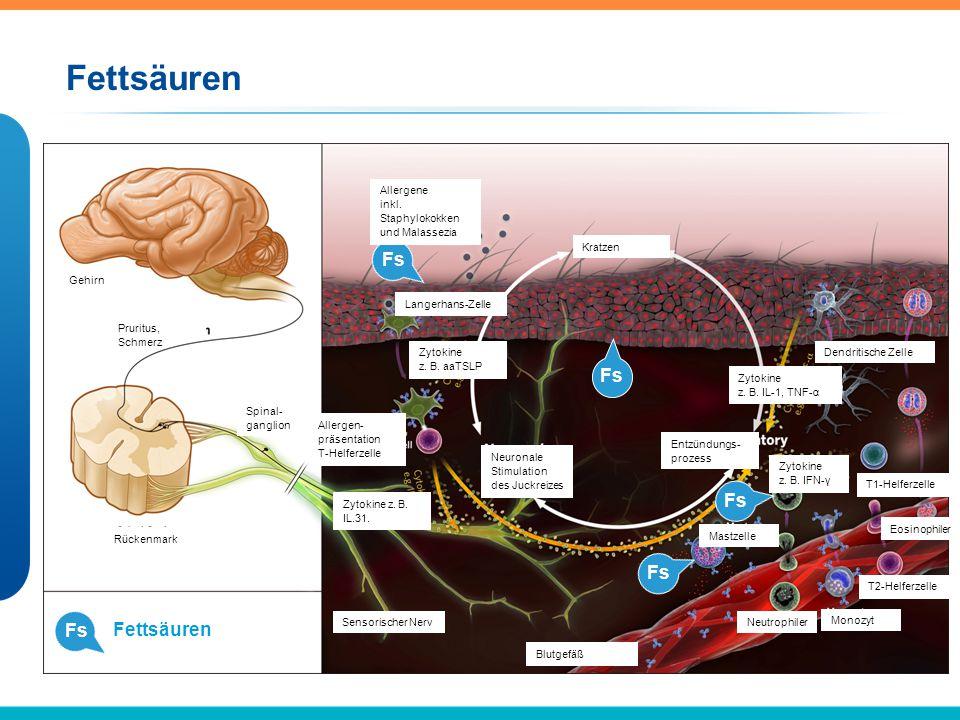 Fs Fettsäuren Fs Gehirn Pruritus, Schmerz Spinal- ganglion Rückenmark Allergene inkl. Staphylokokken und Malassezia Kratzen Langerhans-Zelle Zytokine