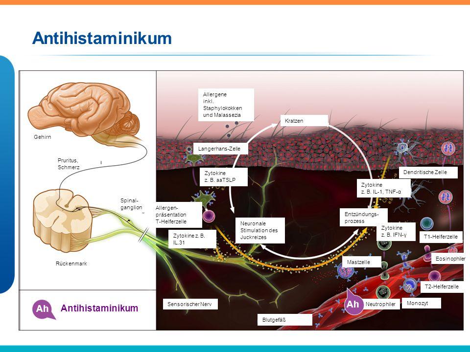 Glukokortikoide Gk Glukokortikoid Fs Gehirn Pruritus, Schmerz Spinal- ganglion Rückenmark Allergene inkl.