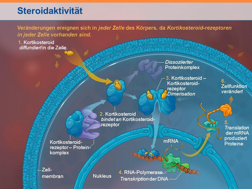 Steroidaktivität mRNA 4. RNA-Polymerase Transkription der DNA 1. Kortikosteroid diffundiert in die Zelle. Zell- membran Nukleus 5. Translation der mRN