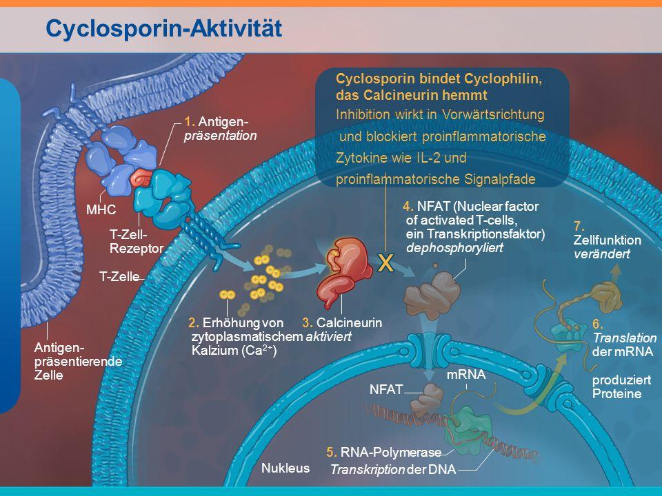 Cyclosporin-Aktivität mRNA 5. RNA-Polymerase Transkription der DNA 1. Antigen- präsentation Nukleus 6. Translation der mRNA produziert Proteine 3. Cal
