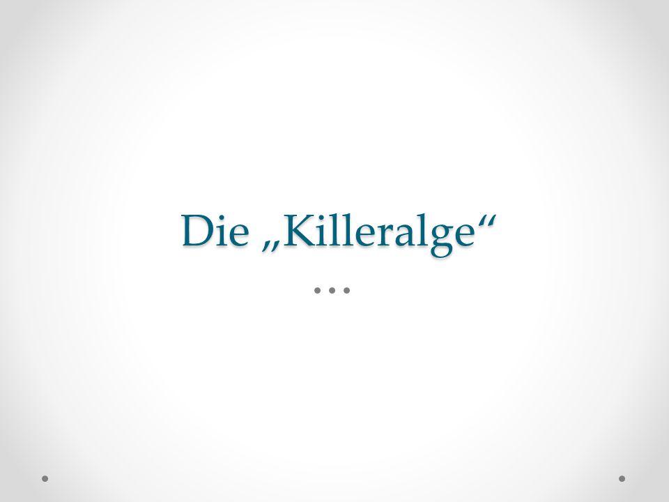 """Die """"Killeralge"""""""