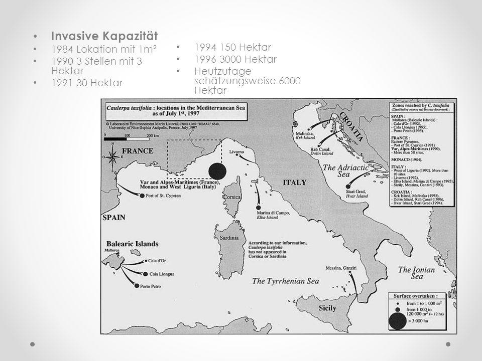 Invasive Kapazität 1984 Lokation mit 1m² 1990 3 Stellen mit 3 Hektar 1991 30 Hektar 1994 150 Hektar 1996 3000 Hektar Heutzutage schätzungsweise 6000 H