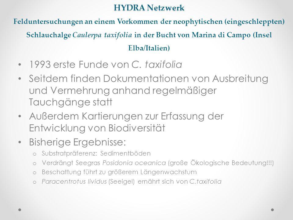 HYDRA Netzwerk HYDRA Netzwerk Felduntersuchungen an einem Vorkommen der neophytischen (eingeschleppten) Schlauchalge Caulerpa taxifolia in der Bucht v