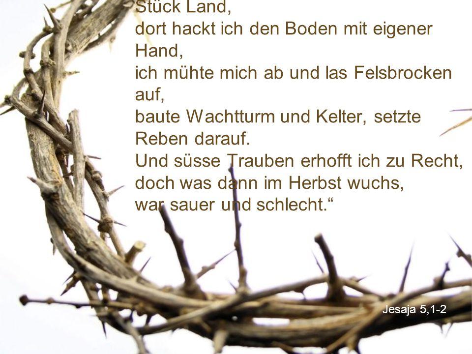 """Jesaja 5,1-2 """"Auf fruchtbarem Hügel, da liegt mein Stück Land, dort hackt ich den Boden mit eigener Hand, ich mühte mich ab und las Felsbrocken auf, baute Wachtturm und Kelter, setzte Reben darauf."""