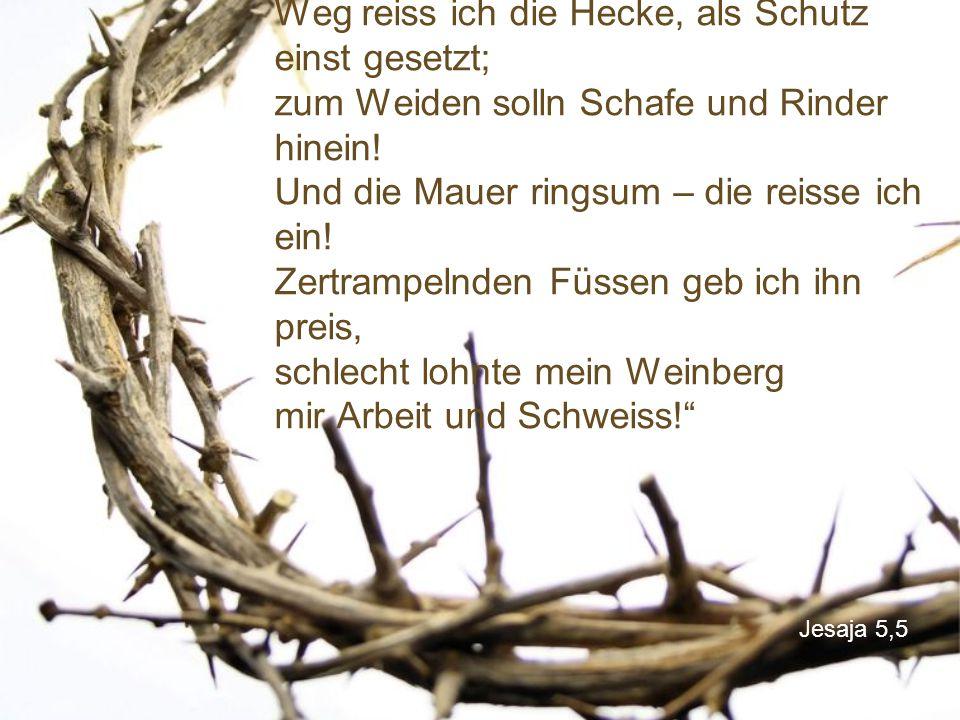 """Jesaja 5,5 """"Ich sage euch, Leute, das tue ich jetzt: Weg reiss ich die Hecke, als Schutz einst gesetzt; zum Weiden solln Schafe und Rinder hinein! Und"""