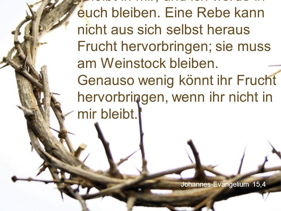 """Johannes-Evangelium 15,4 """"Bleibt in mir, und ich werde in euch bleiben. Eine Rebe kann nicht aus sich selbst heraus Frucht hervorbringen; sie muss am"""