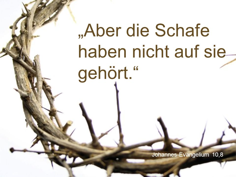 """Johannes-Evangelium 10,8 """"Aber die Schafe haben nicht auf sie gehört."""""""