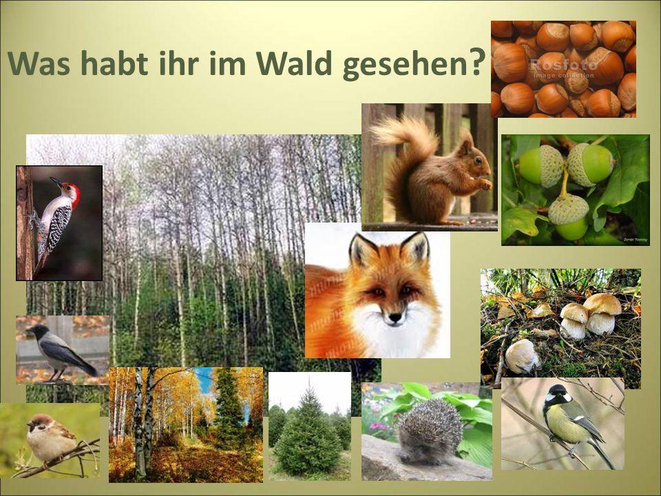 Was habt ihr im Wald gesehen ?