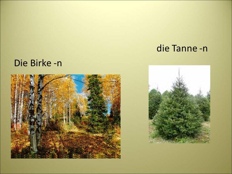 die Tanne -n Die Birke -n
