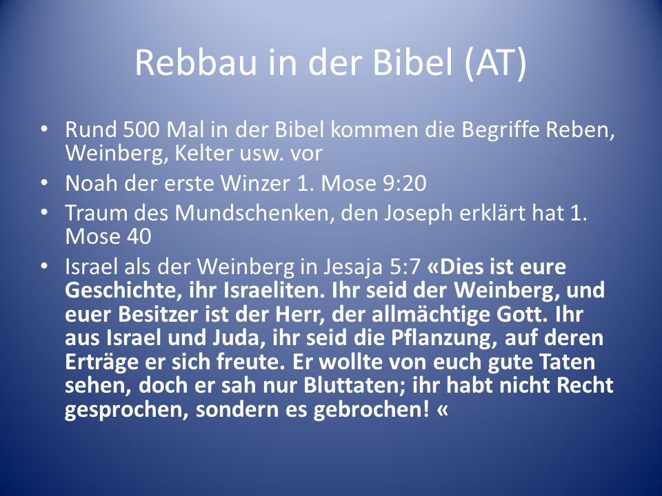 Rebbau in der Bibel (AT) Rund 500 Mal in der Bibel kommen die Begriffe Reben, Weinberg, Kelter usw. vor Noah der erste Winzer 1. Mose 9:20 Traum des M