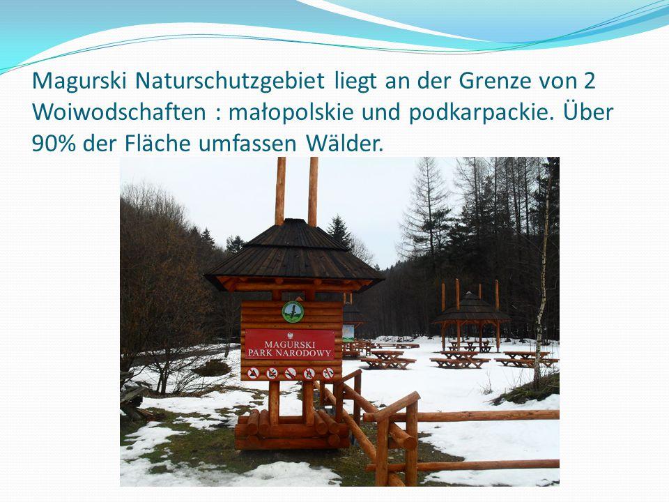 Magurski Naturschutzgebiet liegt an der Grenze von 2 Woiwodschaften : małopolskie und podkarpackie. Über 90% der Fläche umfassen Wälder.