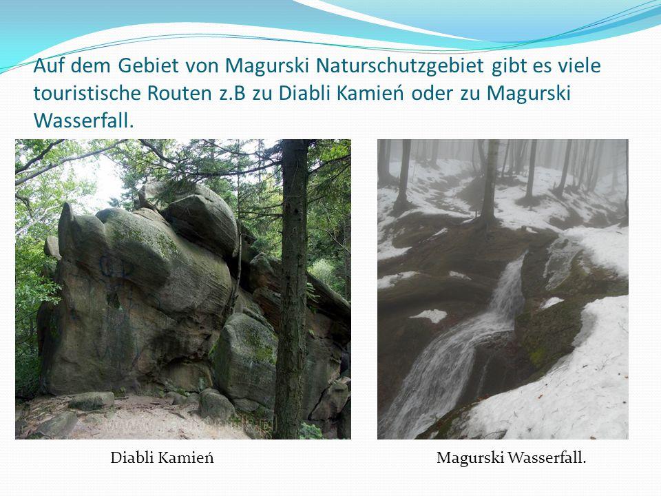 Auf dem Gebiet von Magurski Naturschutzgebiet gibt es viele touristische Routen z.B zu Diabli Kamień oder zu Magurski Wasserfall. Diabli Kamień Magurs