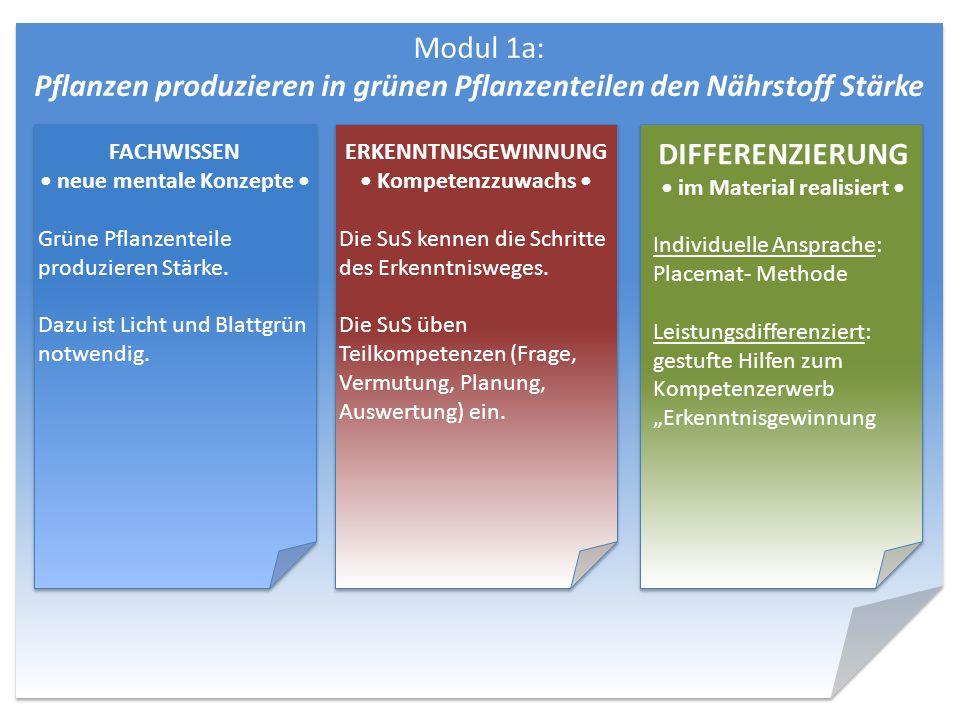 Modul 1a: Pflanzen produzieren in grünen Pflanzenteilen den Nährstoff Stärke DIFFERENZIERUNG im Material realisiert Individuelle Ansprache: Placemat-