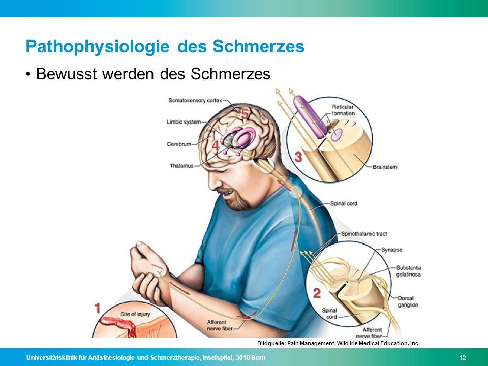 Universitätsklinik für Anästhesiologie und Schmerztherapie, Inselspital, 3010 Bern12 Pathophysiologie des Schmerzes Bewusst werden des Schmerzes Bildq